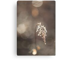 Beauty in Nature Canvas Print