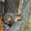 Little Miss Squirrel by Keala
