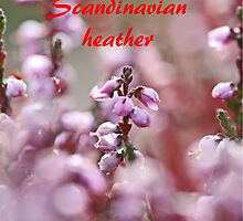 Scandinavian heather. by MQ20