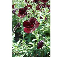 Black Flower Photographic Print
