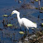 GREAT EGRET by TomBaumker
