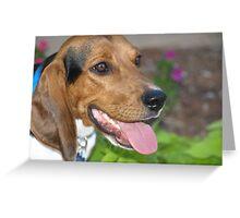 Tub Tub the Beagle Greeting Card