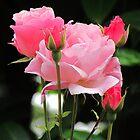 Pinks by Dawn B Davies-McIninch
