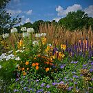 Late Summer Blooms by Colin Metcalf