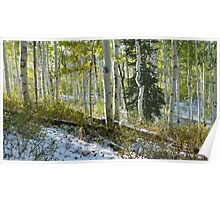 Aspen Highlights with Pine in Snow Poster