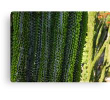 Strange Plantlife - Cactus Garden Barcelona Canvas Print