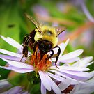Busy Bee by Sandra Pearson