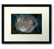 Porcupine fish portrait  Framed Print