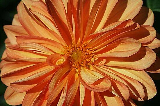 Decidedly Orange by Monnie Ryan