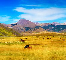Cattle Grazing Autumn Panorama by Bo Insogna