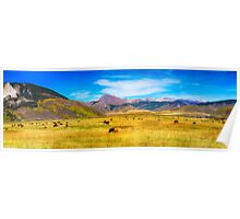 Cattle Grazing Autumn Panorama Poster
