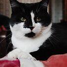 Cat Ian by Maksim Lazarenko