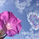 Good Morning my Glory by Kimberly Palmer