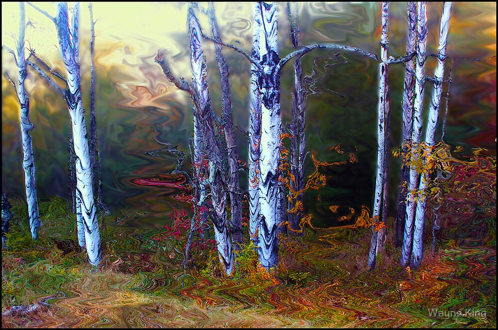 Halloween Birches by Wayne King