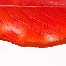 Bi Color Leaf by WildestArt
