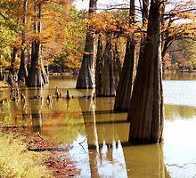 Cypress Autumn by WildestArt