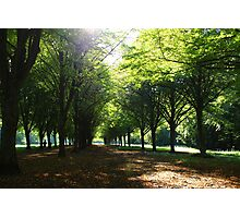 The Nature in city parks Photographic Print
