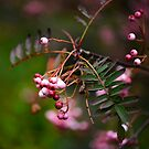 Sorbus  by photobymdavey