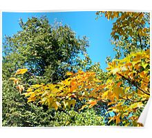 Tree in the fall Poster