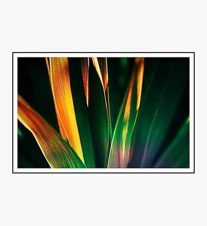 Leafy colour Photographic Print