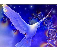 Peaceful Dove Photographic Print