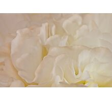 Could It Be Lemon Meringue? Photographic Print