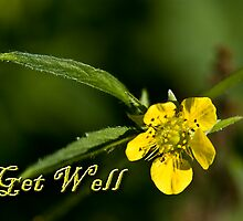 Get Well Buttercup by jkartlife