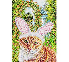 Easter Kitty Photographic Print