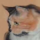 A Curious Cat by Pam Humbargar