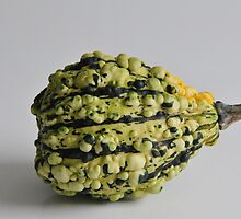 gourd by catherine chin yet