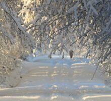 Wintery Path Sticker