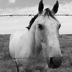 Amicus Equus - B&W by Brianna da Silva