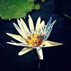 Light Blue by tropicalsamuelv