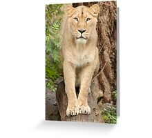 ..Lioness ready to jump you...........[FEATURED] Greeting Card