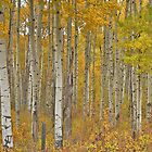 Autumn panorama by Darbs