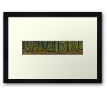 The Ancient Forest Framed Print