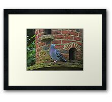 Pigeon on Dovecote Framed Print