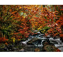 We All Have Our Time ~ Fall Colors ~ Photographic Print