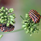 Spots and Stripes by Alison Finch