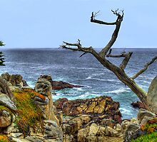 The Ghost Tree Along 17-Mile Drive In Monterey by K D Graves Photography