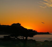 Pacifica Sunset by David Denny