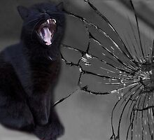 ? ? MEOWW-CAT'S BROKEN MIRROR -7YEARS BAD LUCK-NO - SUPERSTITION AIN'T THE WAY.? ? by ✿✿ Bonita ✿✿ ђєℓℓσ