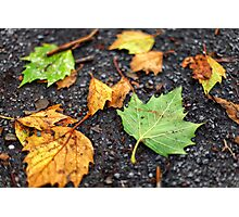 Fall leaves scattered on the ground in Autumn Photographic Print