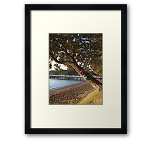 North Island NZ - Yarn Bomb Tree Framed Print