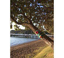 North Island NZ - Yarn Bomb Tree Photographic Print