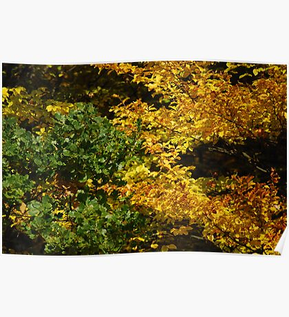 Deciduous forest 2 Poster