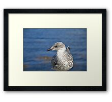 A Seagull's Life Framed Print