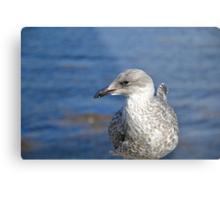 A Seagull's Life Metal Print