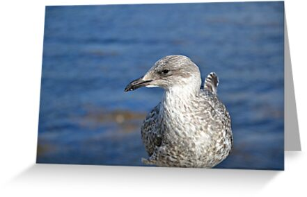 A Seagull's Life by BirgitHM
