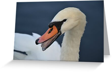 Swan Lake by BirgitHM